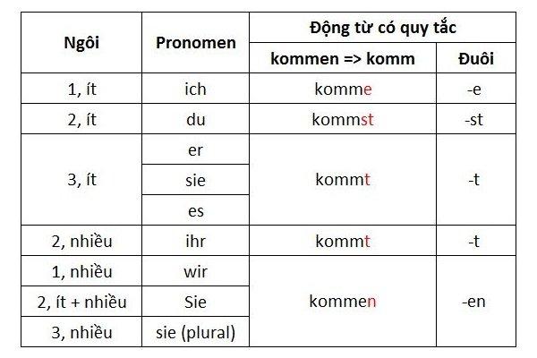Cách chia động từ có quy tắc thì hiện tại trong tiếng Đức